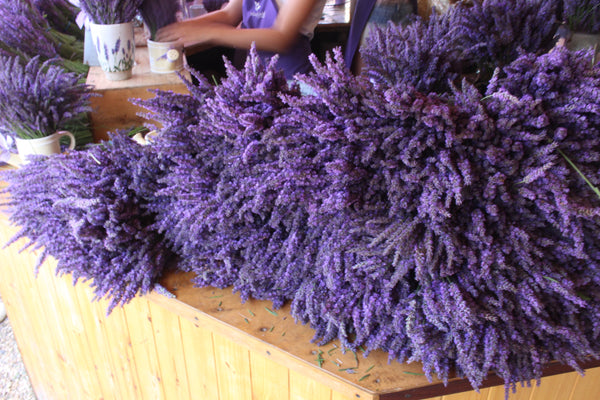 Plant to Perfume at Mayfield Lavender Fields, Surrey - 7th July 2020