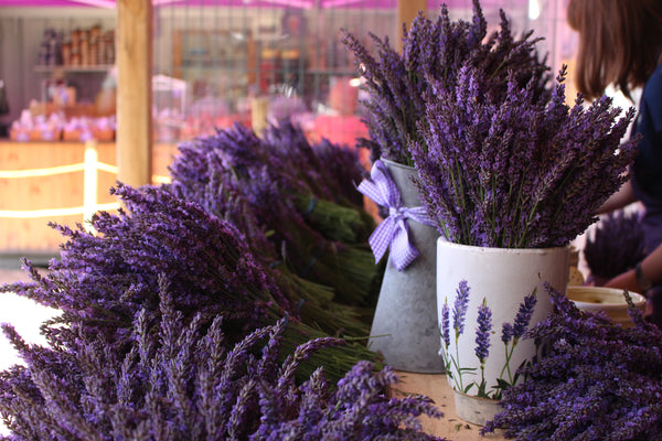 Plant to Perfume at Mayfield Lavender Fields, Surrey - 24th July 2020