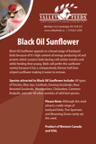 Black Oil Sunflower
