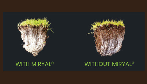 *NEW*  Miryal® All Purpose Grass Seed