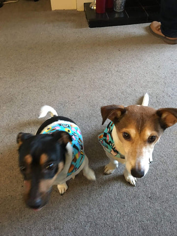 Rosie and Rodney wearing their Licorice Alsorts Bandana