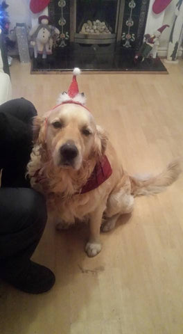 Archie getting into the Christmas spirit