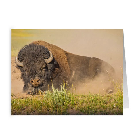 Bison Dirt Bath Folded Note Card