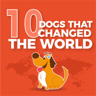 10 Dogs That Changed The World (Full Infographic)