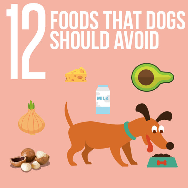 12 Foods That Dogs Should Avoid (Infographic)