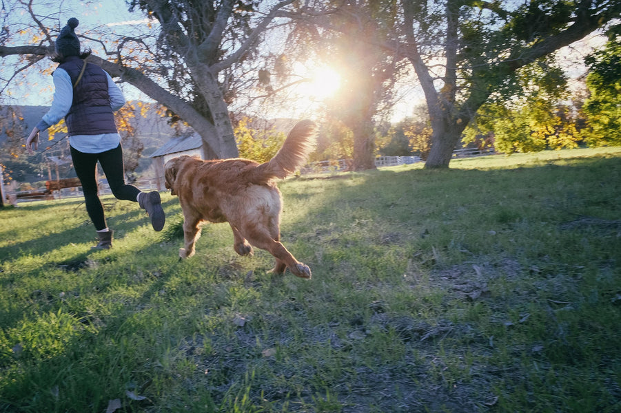 Why You Should Spend Time With Your Dog (7 Great Reasons)