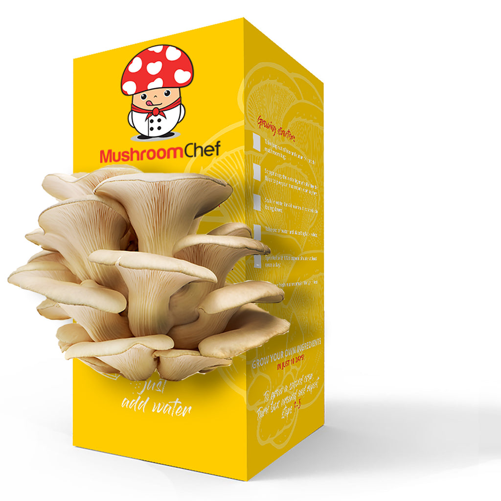 Mushroom Chef Terrarium Growing Kit Saint Louis Missouri MO