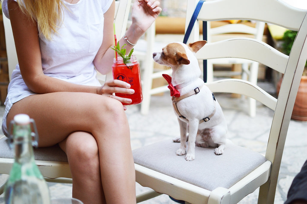 A dog with a cocktail in summer.
