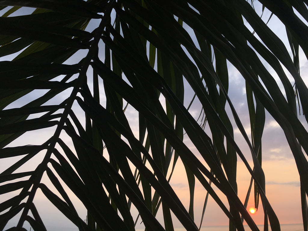 Sun dot thru the palm tree leaves Sundot Marine Flags Sunset Blog