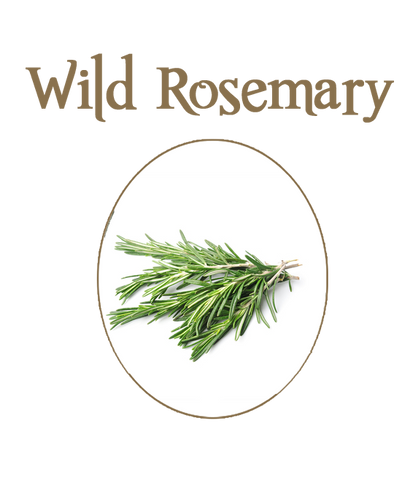 Wild Rosemary Fused Olive Oil - Seasonal Item