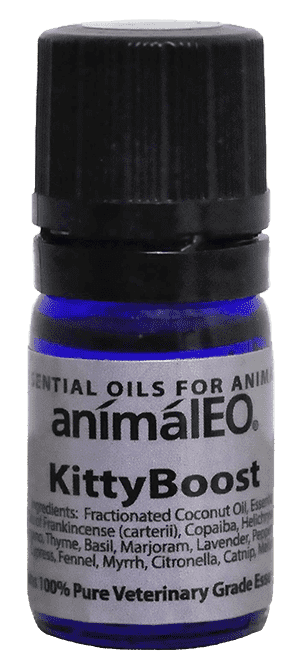 Kitty Boost essential oils