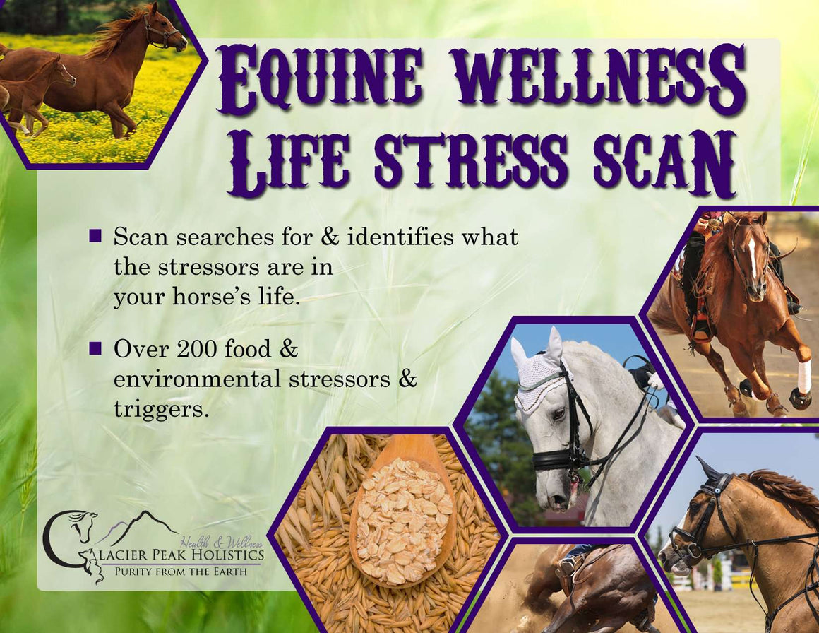 Equine Wellness Life Stress Scan -