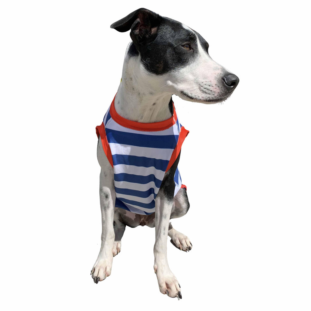 Sailor Stripe  Dog Rashie