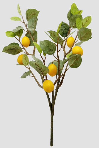 Carraig Donn HOME Wreaths and Garlands Lemon Branch