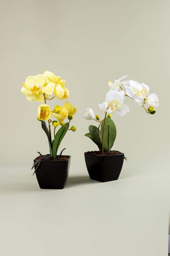 Carraig Donn HOME Home Decorations Orchid Pot Yellow