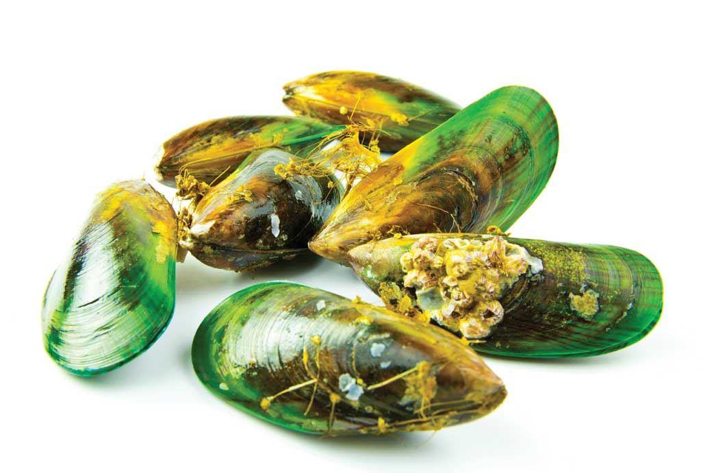 Green Lipped Mussel (GLM) is the Power behind Glyde
