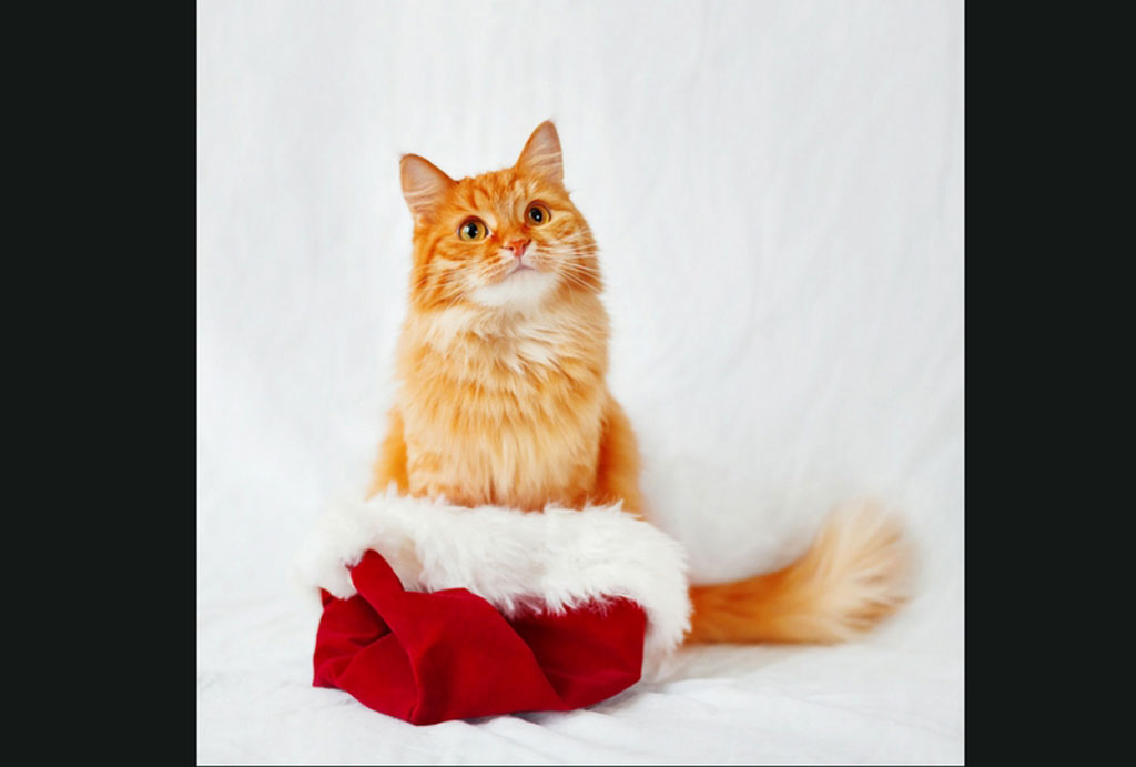 Top Christmas Gifts for Cats & Cat Lovers