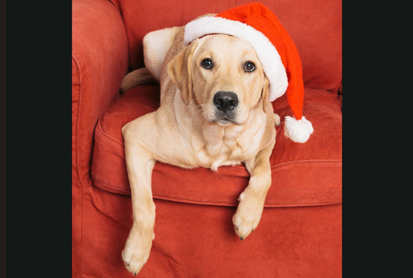 Top Christmas Gifts for Dogs & Dog Lovers