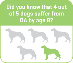 4 out of 5 dogs suffer from osteoarthritis by age 8