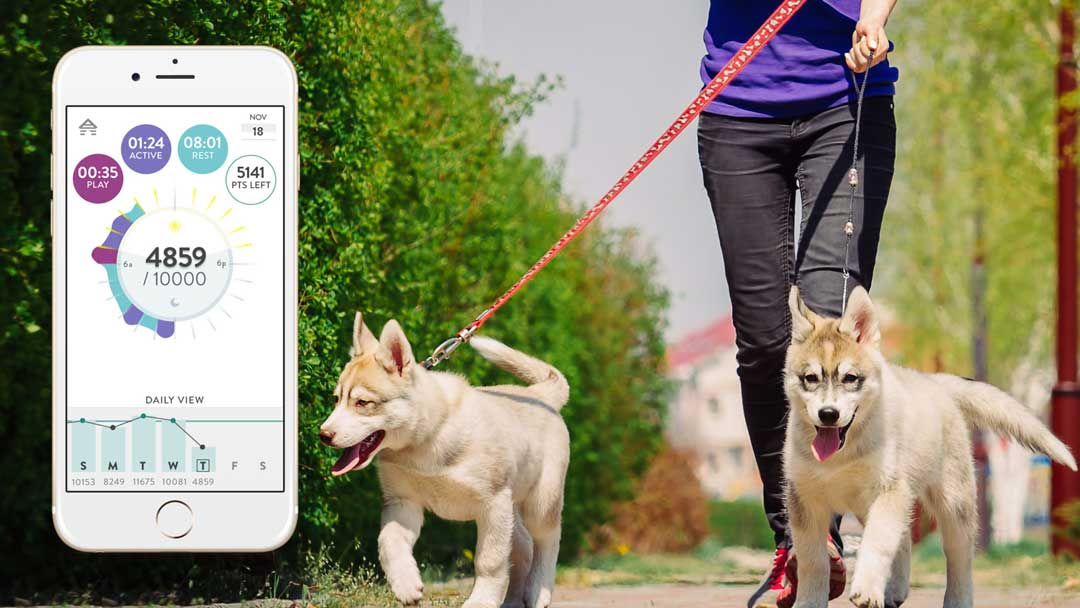 FitBark app with dogs walking