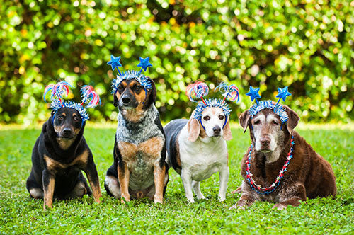 Dogs dressed up for Independence Day