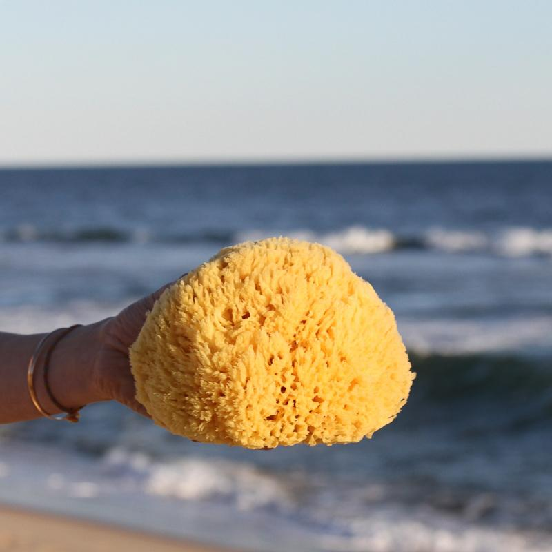 Yellow Sea Sponge