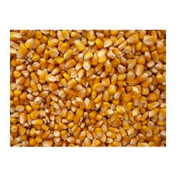 Grains Popcorn Yellow (1x5LB )