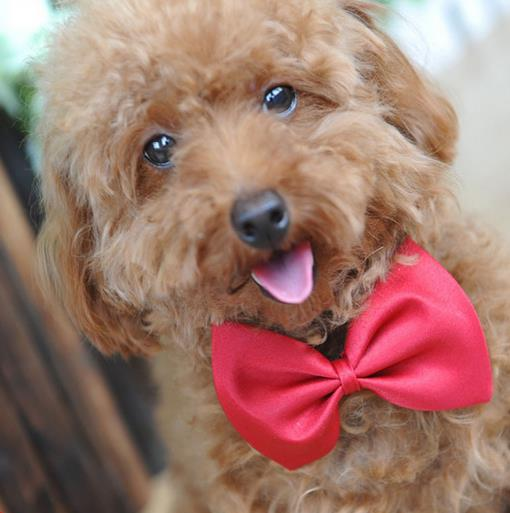 16color  50pc/lot Big sale  Fashion Pet Dog Teddy Tie Bow Cat Neck ties Dog  party Grooming Supplies Polyester & Cotton C07