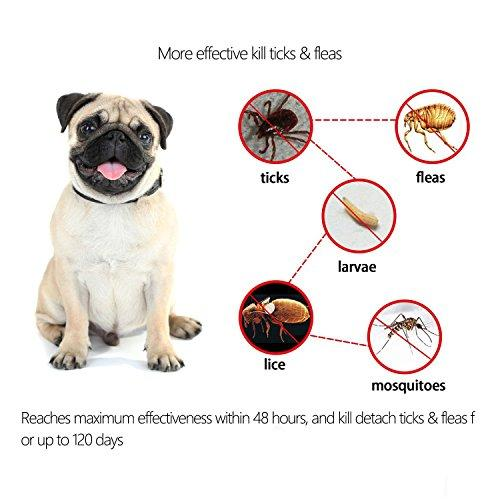 Salute Flea and Tick Collar for Dogs, Adjustable Fits Puppies and Medium Dog, 4 Month Protection, Water Resistant - 20""