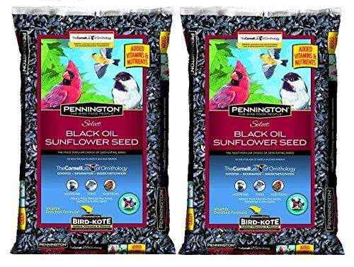 Pennington Select Black Oil Sunflower Seed Wild Bird Feed, 40 lbs (Pack of 2)