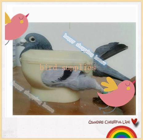 A01 Pet bird pigeon racing for dove products supplies with medicine injection see pigeon eye fixation