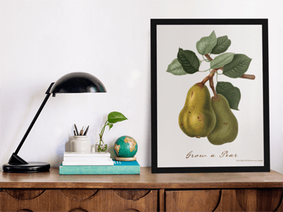 Grow a Pear Canvas in office