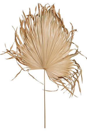 DRIED PALM FROND FAN