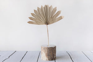 DRIED NATURAL PALM BUNCH - SUN CUT