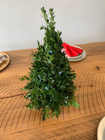 Table Top Boxwood Christmas Trees