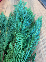 Leyland Cypress Bunches