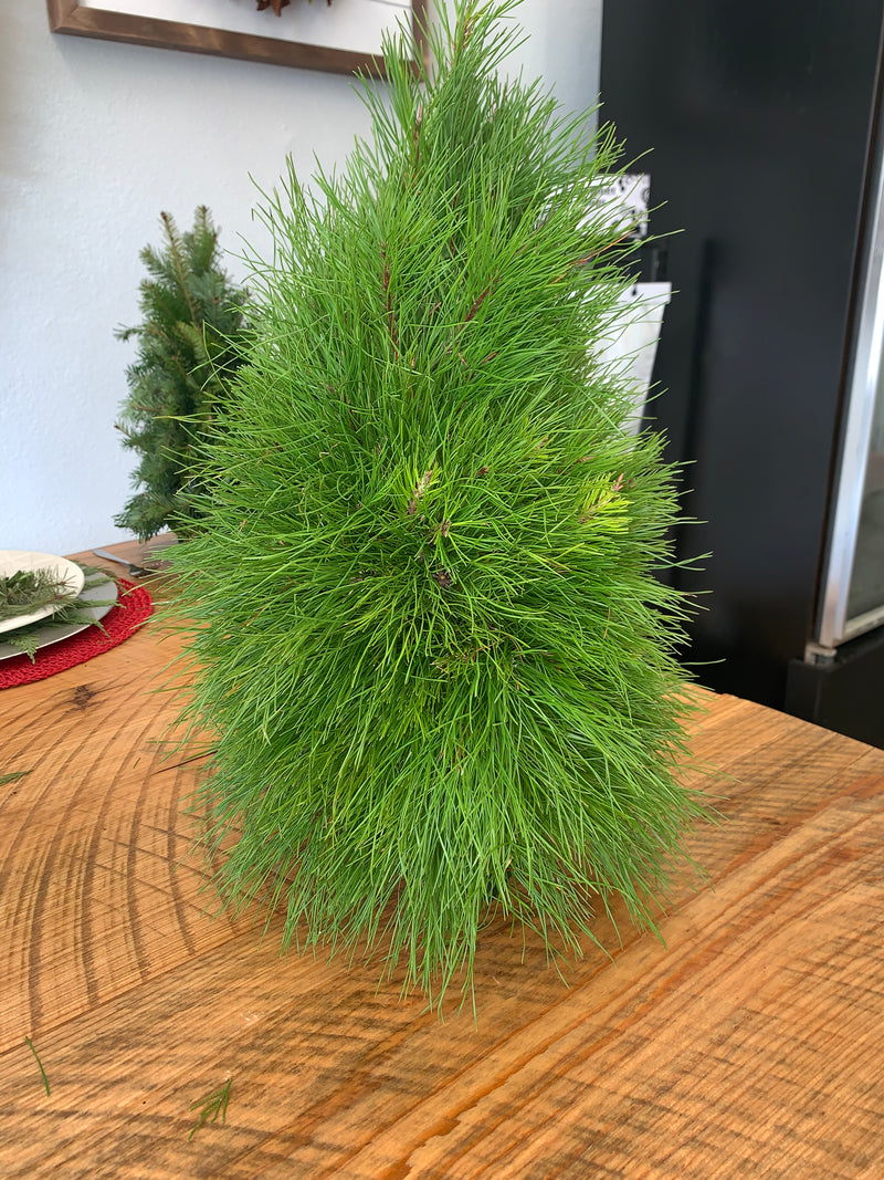 Table Top Florida Pine Christmas Tree