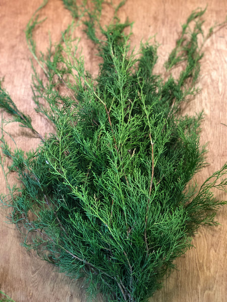 Florida Cedar Bunches