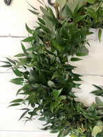 Italian Ruscus and Seeded Eucalyptus Wreath