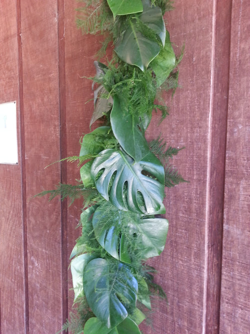 Monstera Plumosus Garland