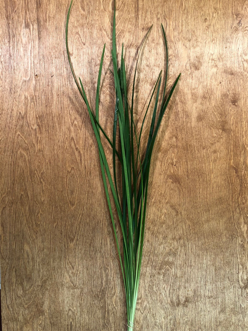 Green Ribbon (Lilly Grass) Bunches