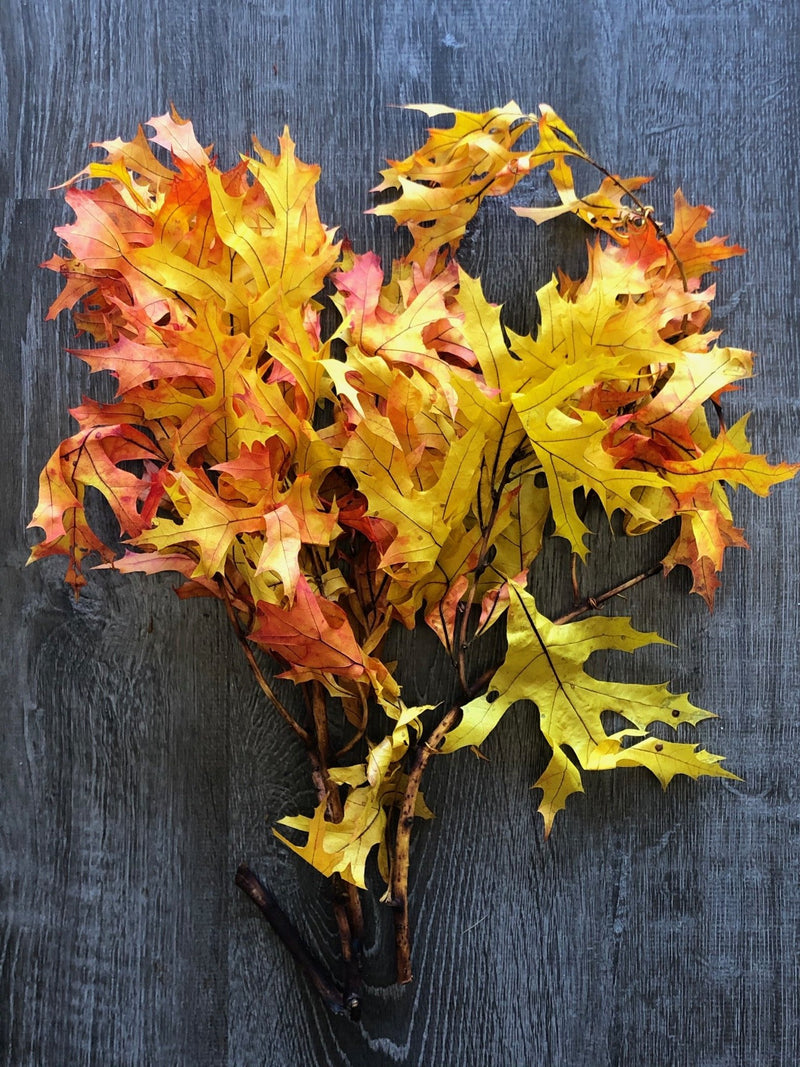 Painted Oak Leaves Bunches