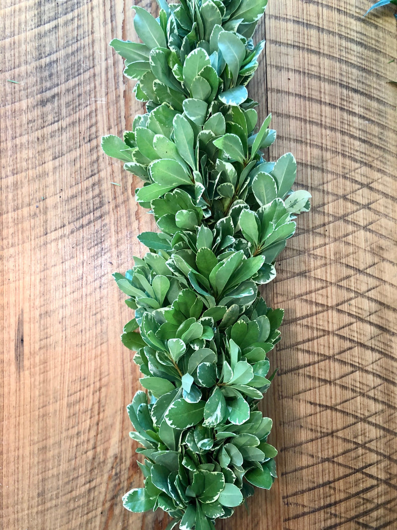 Variegated Pittosporum Garland