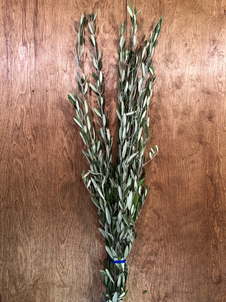 Olive Leaf Bunches