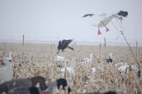 Snow Goose Flapping Flyer