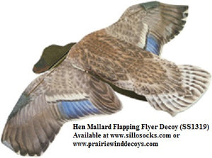 Hen Mallard Duck Flapping Flyer