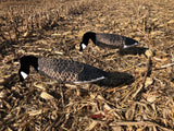Windsock silhouette Canada goose decoys in a corn field