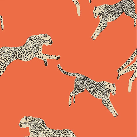 LEAPING CHEETAH CLEMENTINE SC 0002 WP88449