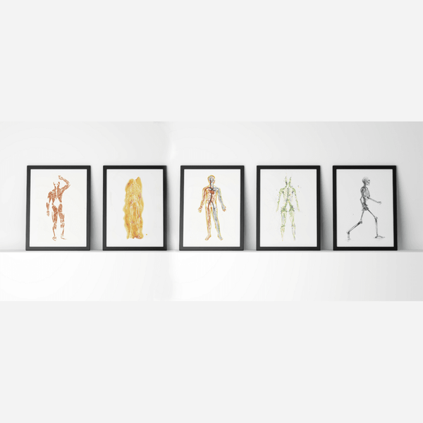 Body Systems Set of 5