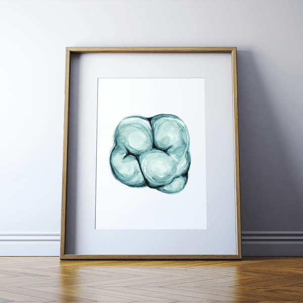 Molar in Aqua II Print